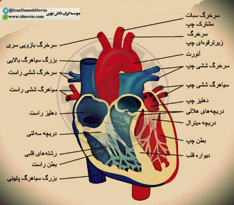 عکس قلب کتاب زیست شناسی